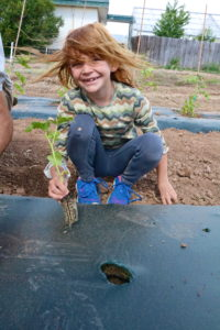Picture of girl planting tomatoes as a part of Dig In! Camp